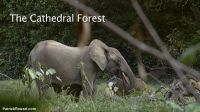 cathedral-forest-01
