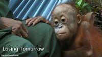 Losing-tomorrow-01